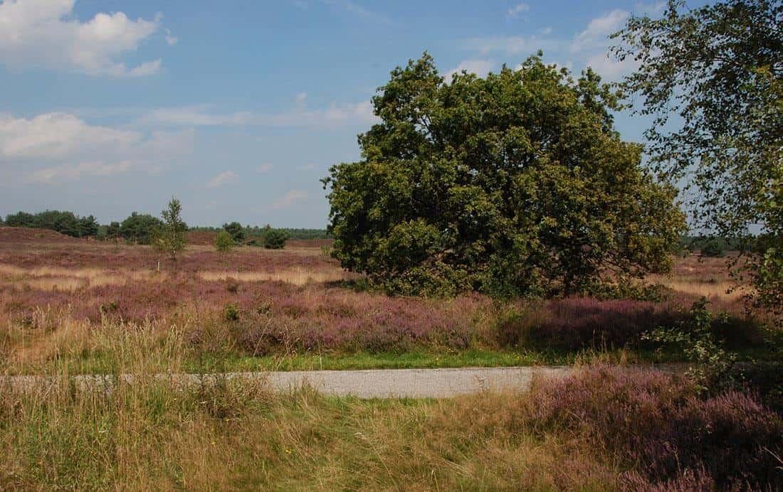 Fietsroutes in Gelderland