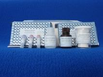 Bovichek® Neospora (serum & milk) img