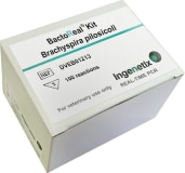 BactoReal® Kit Brachyspira pilosicoli img