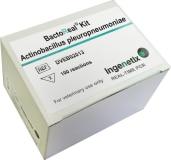 BactoReal® Kit Actinobacillus pleuropneumoniae img