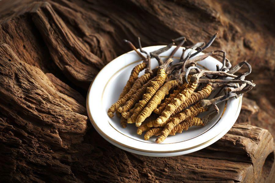 assiette avec plusieurs cordyceps
