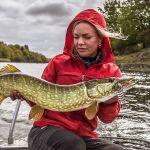 Spoon-Fed Pike