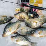 Early Winter Crappie Tactics