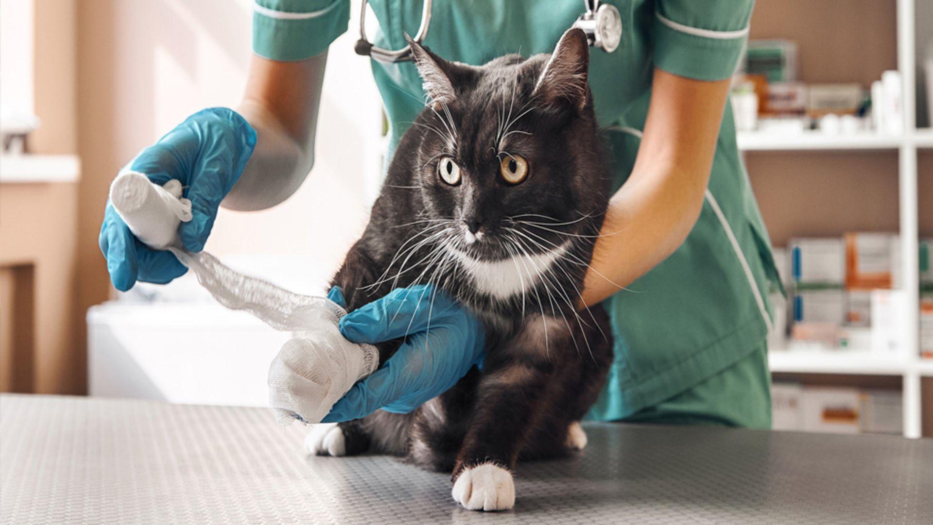 Drömmer du om att jobba med djurvård?