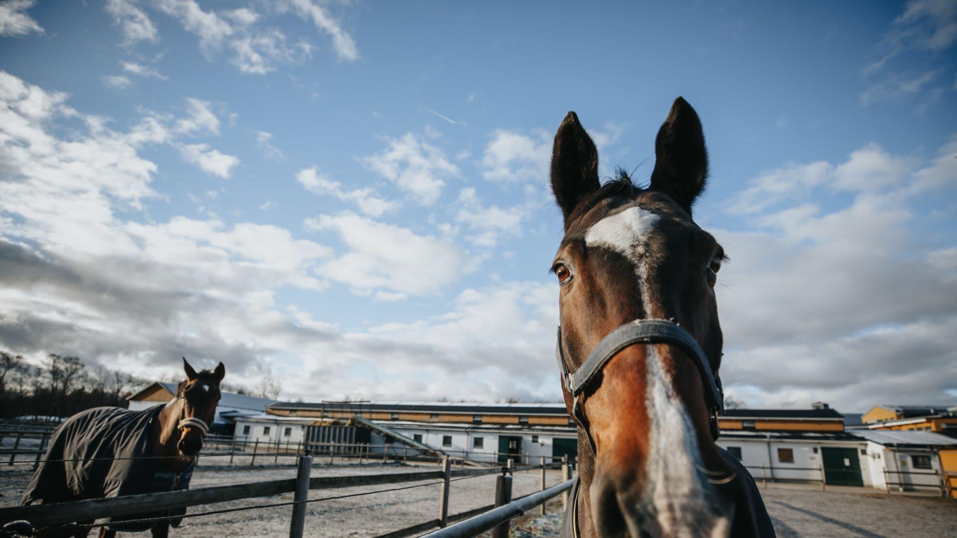 Hästskötarexamen under gymnasietiden