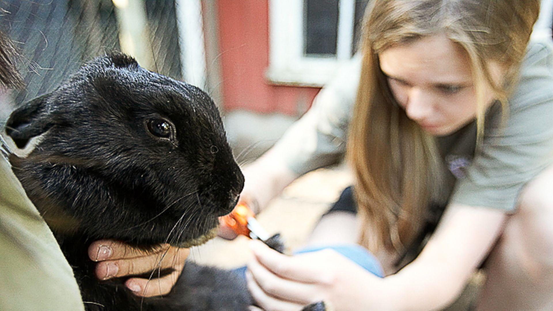 Vad är skillnaden mellan utbildningarna Hund- och Sällskapsdjur och Djursjukvård.