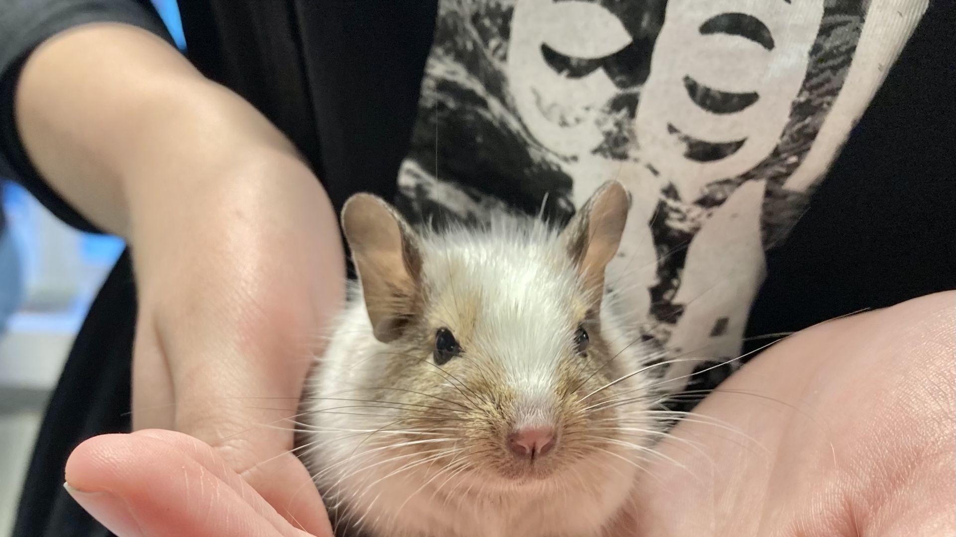 Plugga Sällskapsdjur & Djursjukvård hos oss på Realgymnasiet!