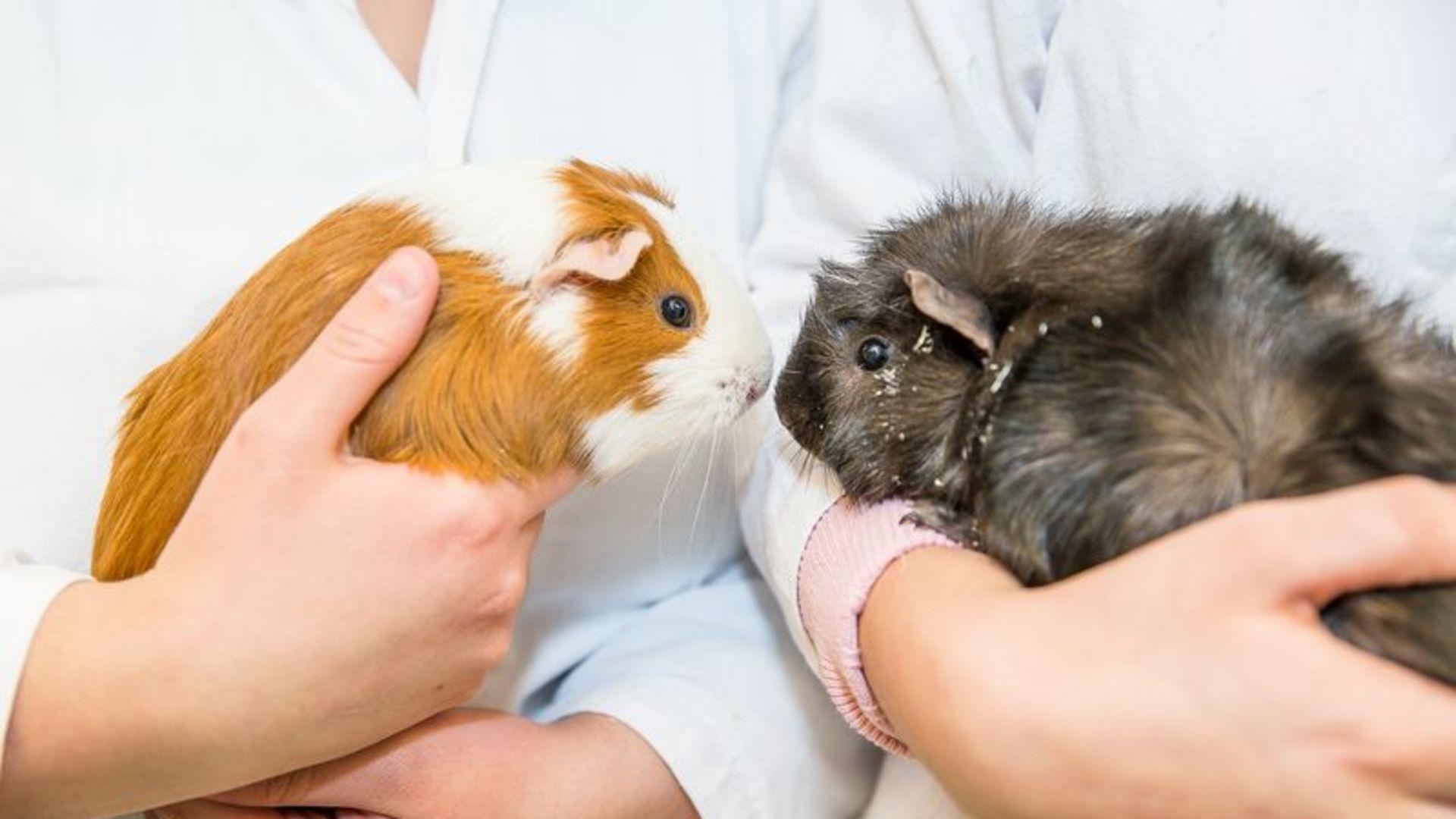 Nationellt APL-samarbete med Zoobranschens Riksförbund