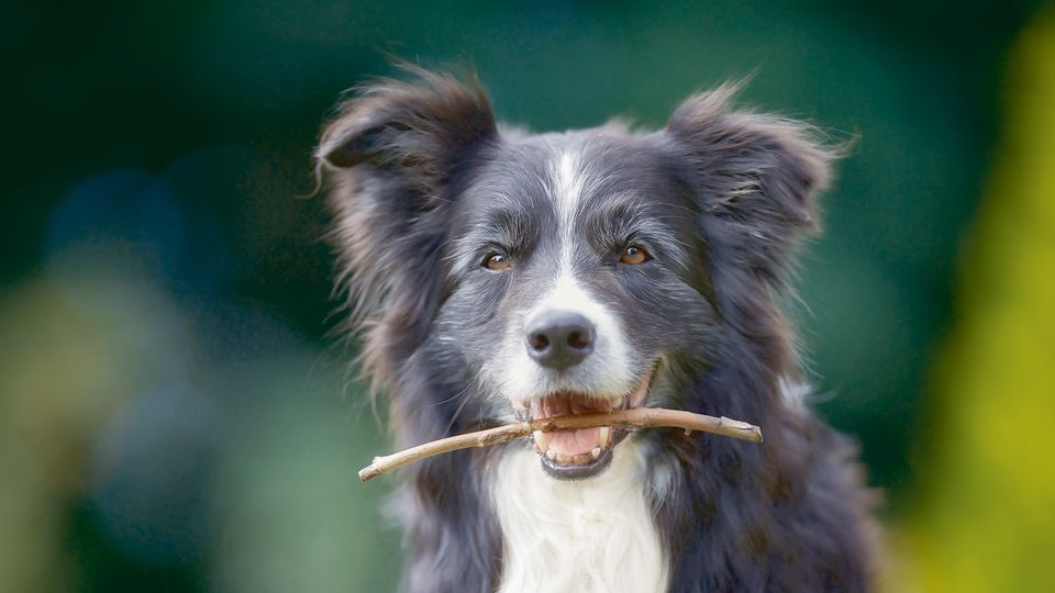 Hundutbildning till Realgymnasiet i Norrköping