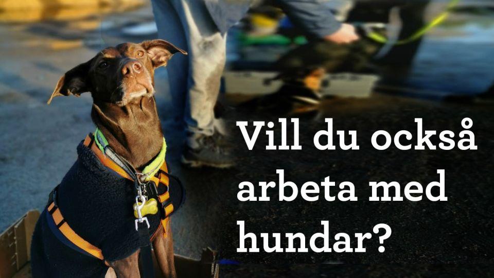 Drömmer du om att arbeta med hundar i framtiden?