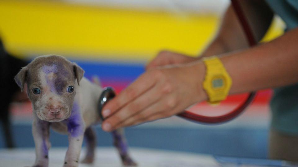 Djursjukvård med branschcertifikat