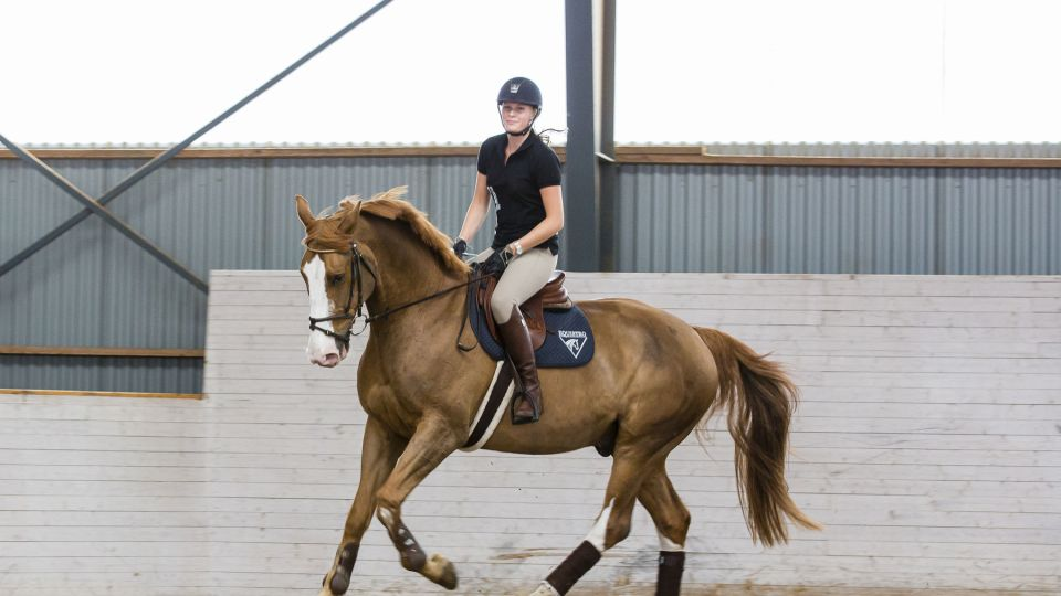Vår hästutbildning ger dig ett försprång ut i en stark bransch - hela 78% fler sökte den i år!