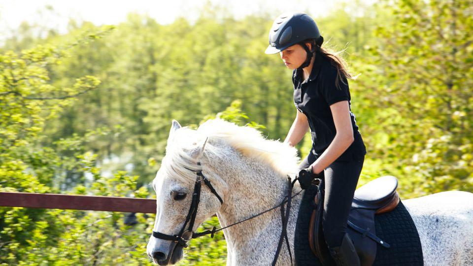 Bli en del av Sveriges största nätverk inom Häst