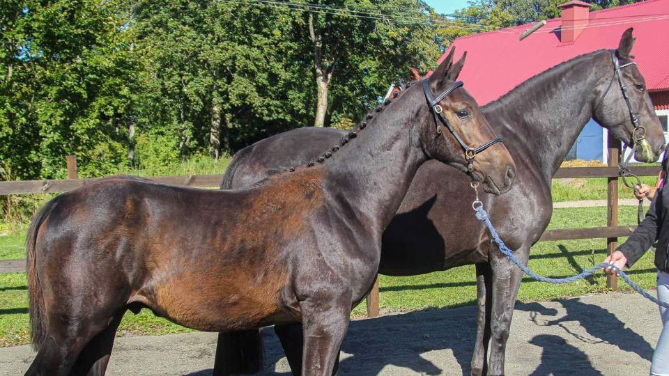 Ju mer kunskap vi har om hästarna desto bättre ledare blir vi för dem!