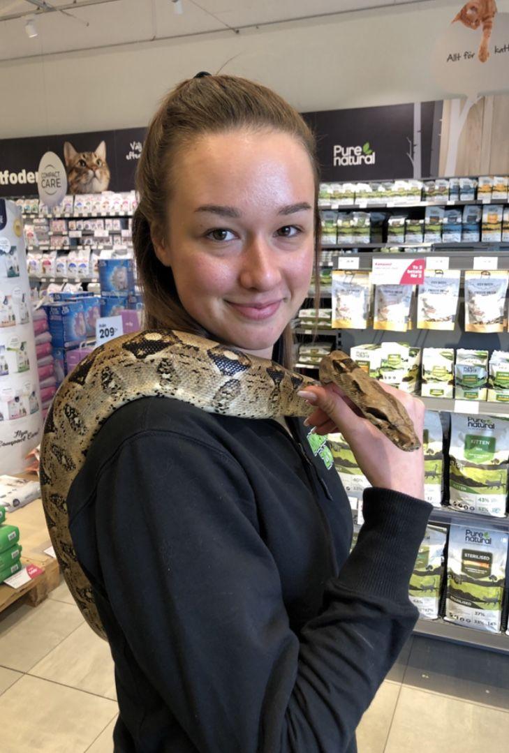En vanlig dag på jobbet för Emma på Arken Zoo