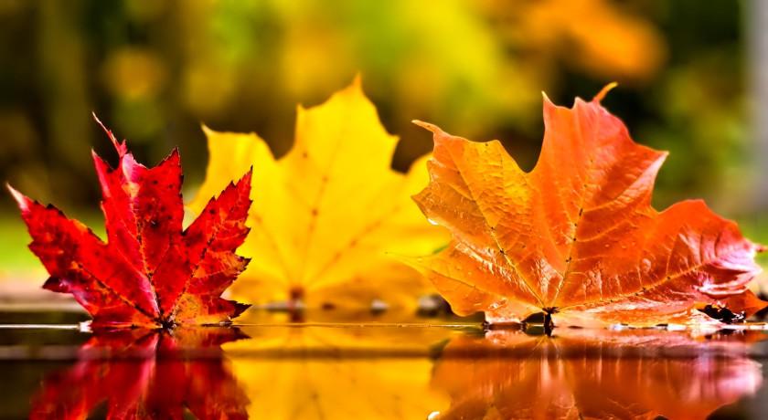 Bildresultat för hösten