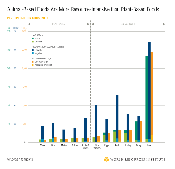 animal-based foods more resource-intensive than plant-based foods