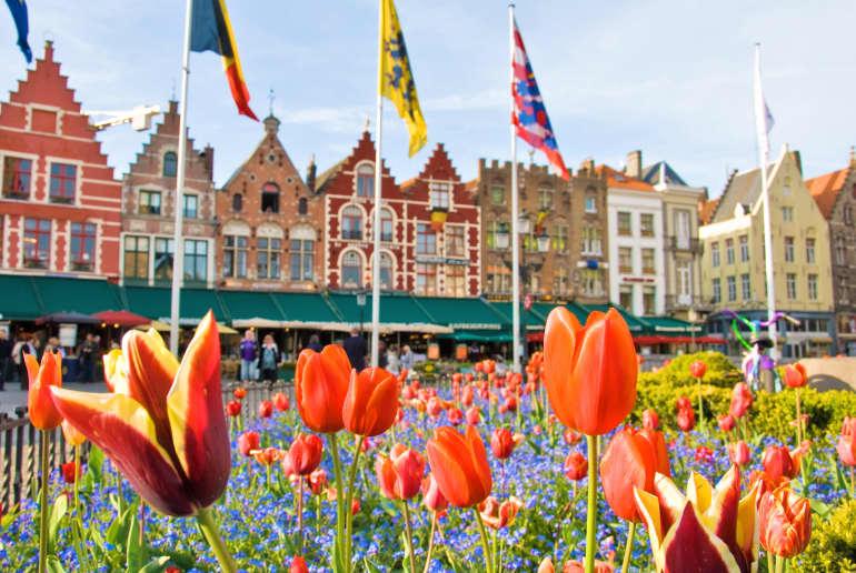 Tulpen in Niederlande