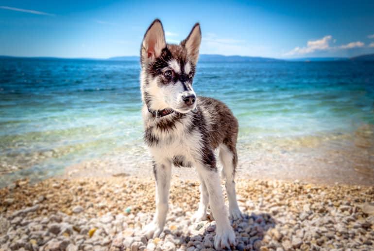 Hund am Strand Kroatien