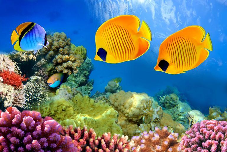 Riff mit bunten Fischen in Ägypten
