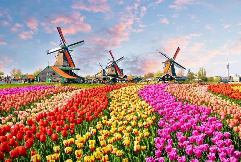 Tulpenfeld in Holland
