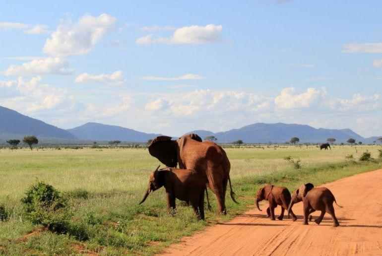 Elanfanten Mama mit Kindern in Kenia