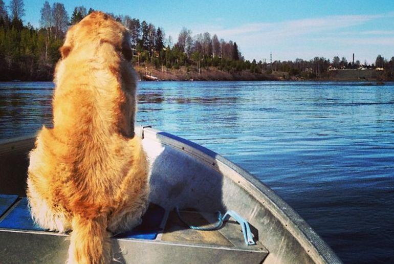 Hund auf Boot in Schweden