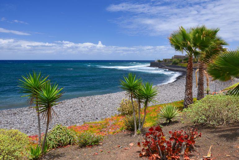 Palmen am Stand auf Teneriffa