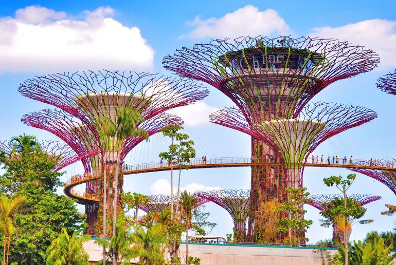 Bäume in Singapur