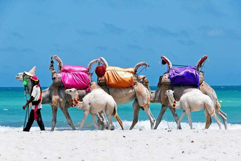 Kamele am Sidi Mehrez Strand in Tunesien