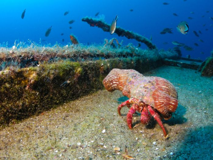 Lanzarote, Spain. Scuba dive and discover the underwater museum