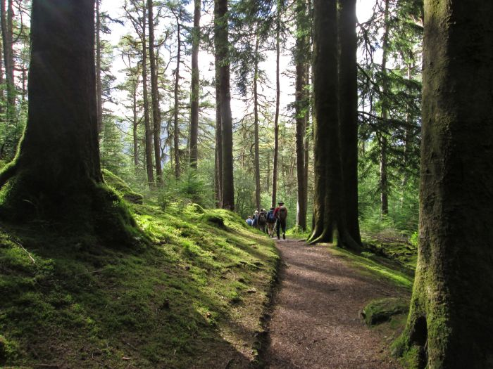 Dunoon, Scotland. Looking for peaceful walking trails? Head to Argyll Forest Park