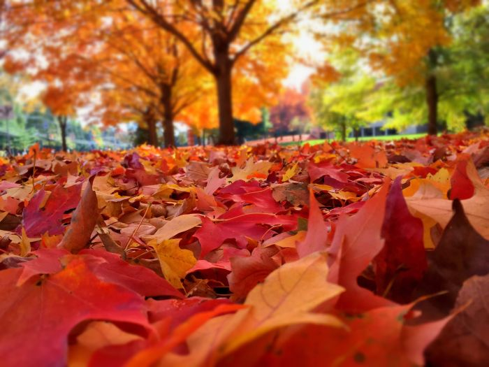 Munich, Germany. Stroll through the tree-lined streets carpeted with golden leaves