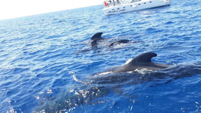 Tenerife, Spain. See marine life while snorkelling or kayaking; stargaze from Mount Teide