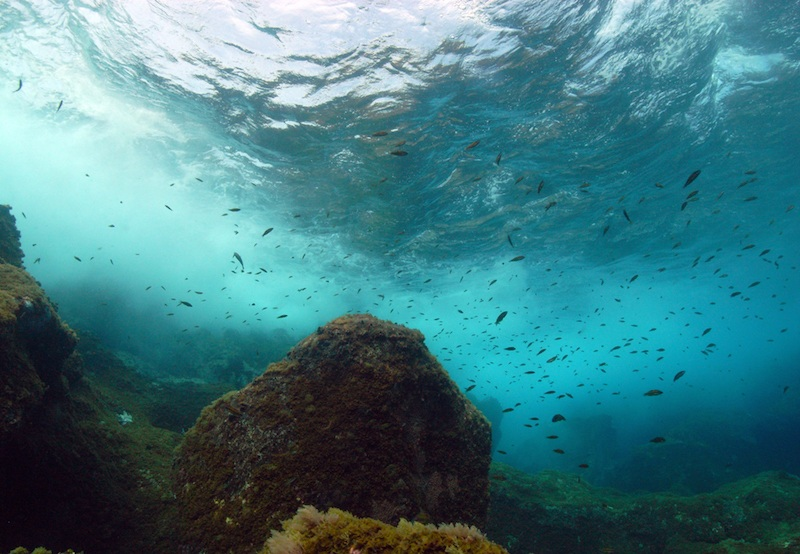 El Hierro, considerado el mejor destino europeo para bucear tanto por sus impresionantes paisajes submarinos. Foto: Philippe Guillaume/ Flickr cc.