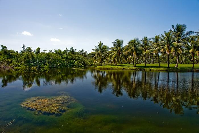 Qué ver en Miami: jardín botánico