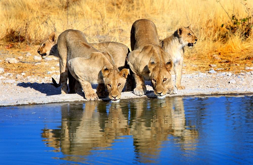 sud africa luxury