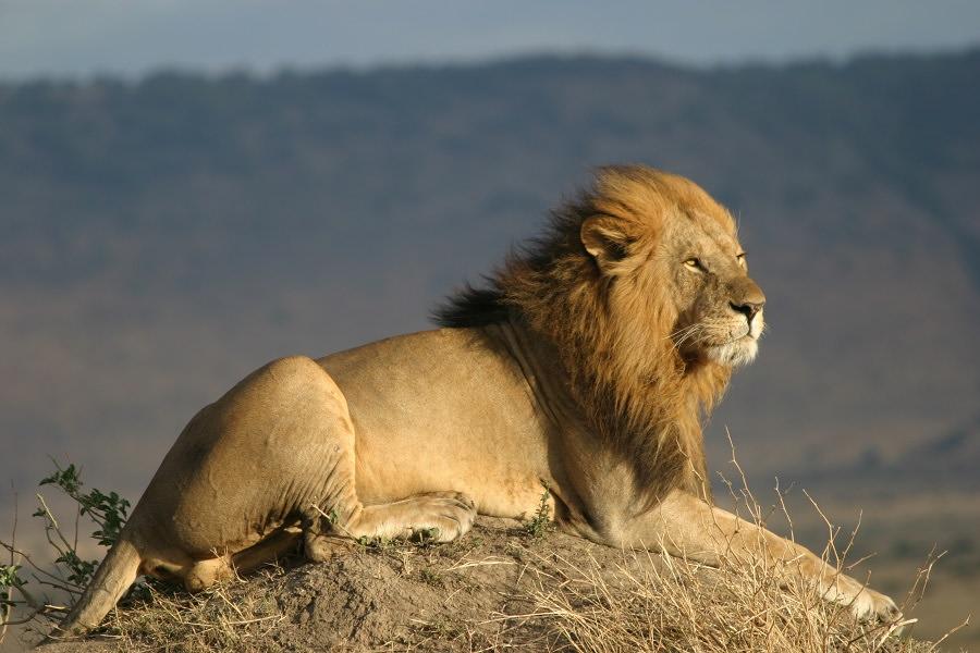 Il Mal d'Africa e gli animali della Savana