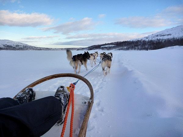 ruta en trineo con huskies