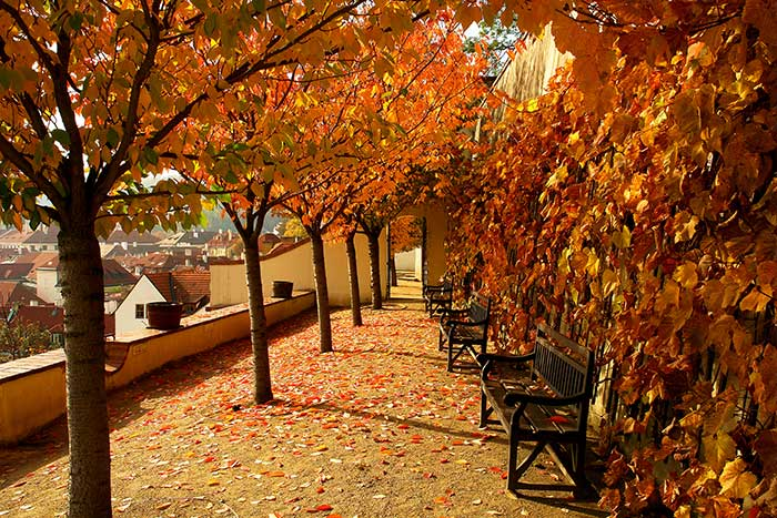 Prague in autumn © Prague City Tourism