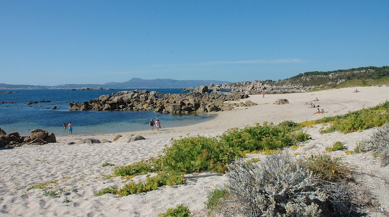 Playas vírgenes: o grove