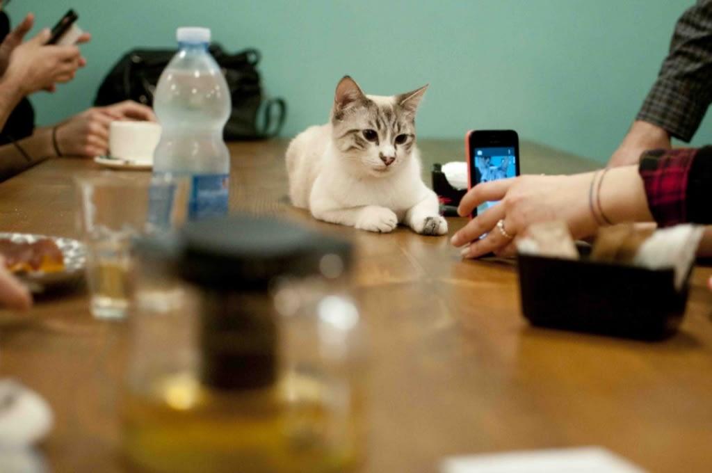 Copyright: Crazy Cat Cafè, Milano
