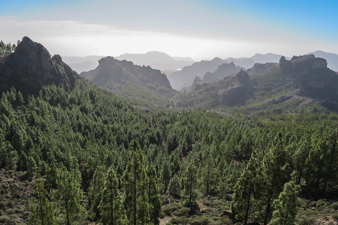 Le foreste di pini, uno dei tesori delle Canarie
