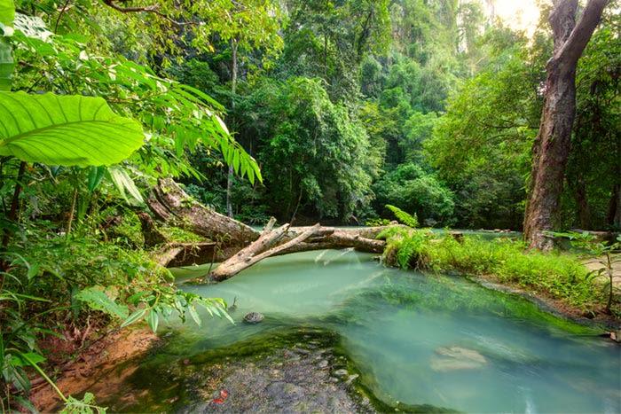 Selva de Phuket en Tailandia