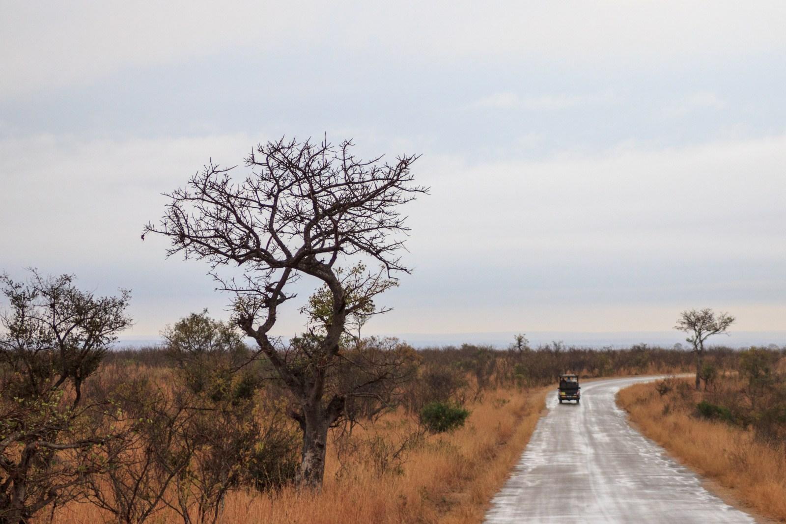 Sudafrica-Kruger-Park