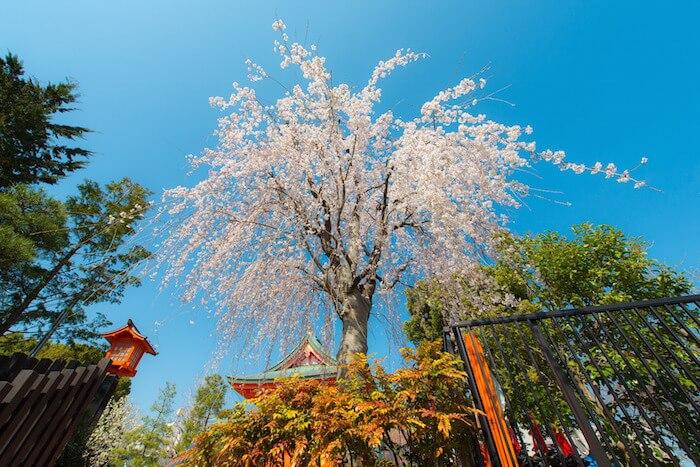 paisaje primaveral en japon