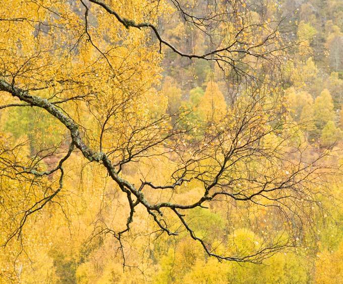 Parque Nacional de Cairngorms en las Tierras Altas de Escocia