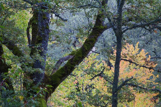 hayedo de montejo en otoño madrid españa