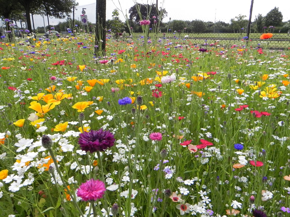 aeropuerto de heathrow flores