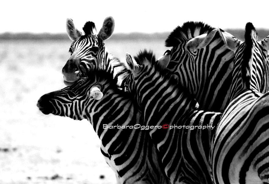 Safari di Barbara Oggero